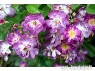 Где можно купить рассаду цветов #10